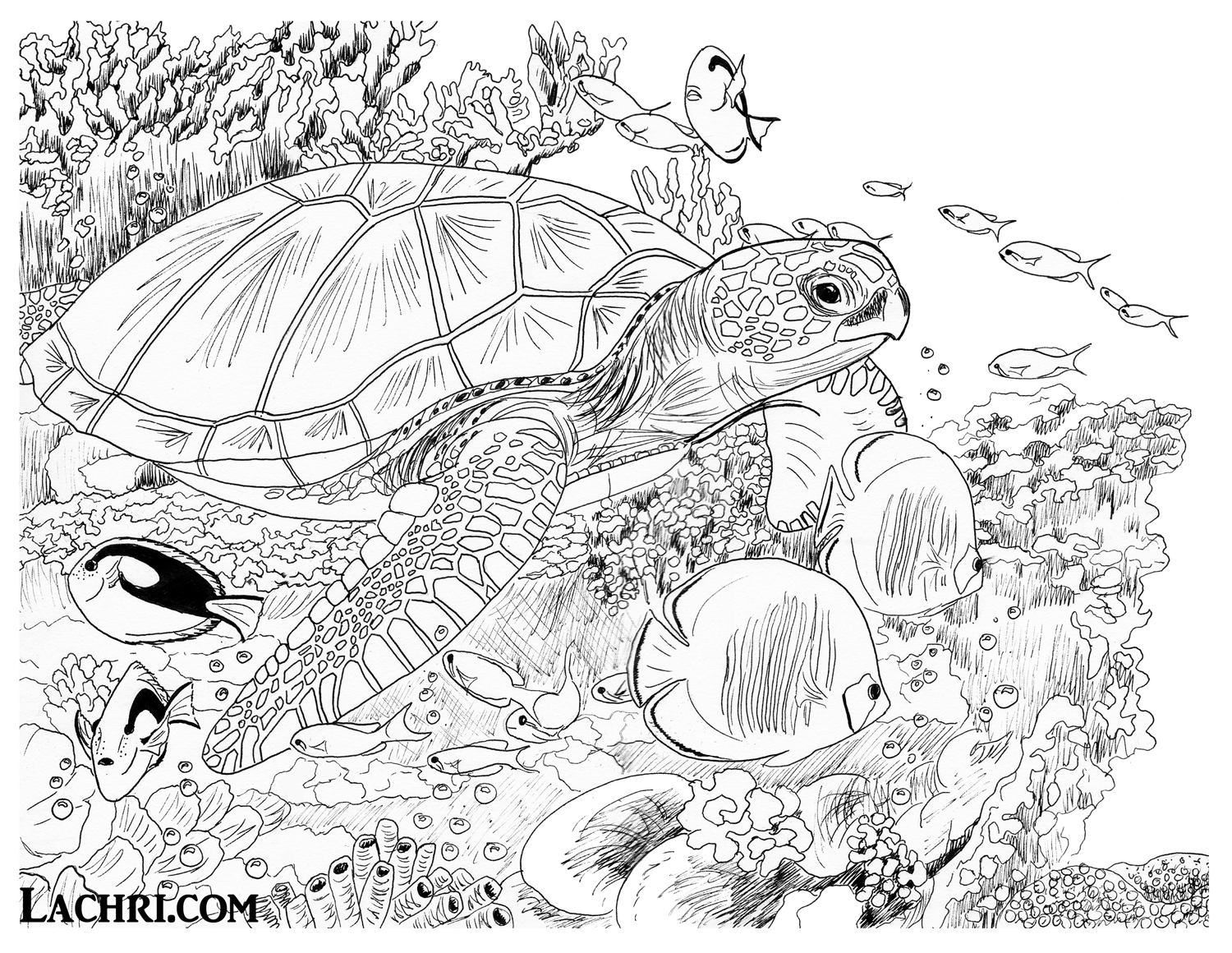 Sea turtle colored pencil tutorial lachri fine art for Sea turtles coloring pages