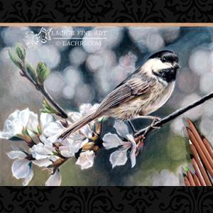 blog-featrued-imagesc