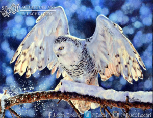 Snowy Owl in colored pencil