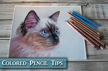 Kitten Colored Pencil Drawing Tutorial