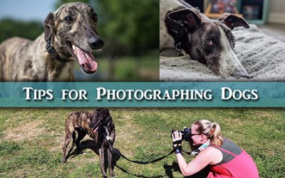 Tips for Taking Photos of Dogs for Portraits