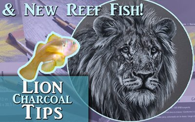 Realistic Charcoal Tips & New Reef Fish!!