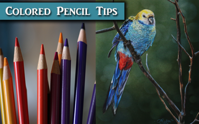Bird Colored Pencil Tips & Paper Review