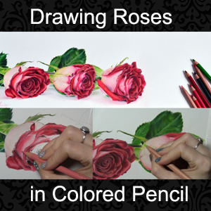 How To Draw Realistic Roses In Colored Pencil Lachri Fine Art