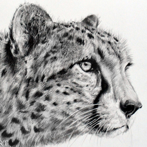 Cheetah Graphite tutorial