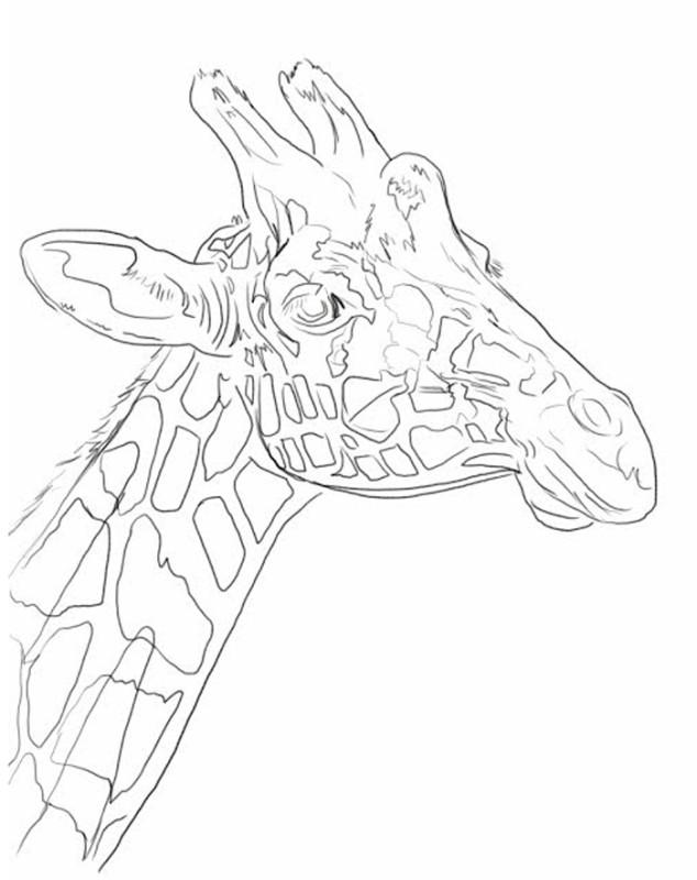 giraffe-line-drawing