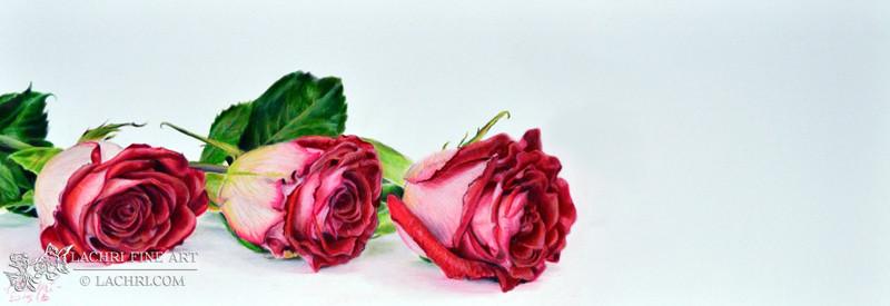 roses-wm